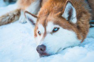 Die Geschichte von zwei Wölfen